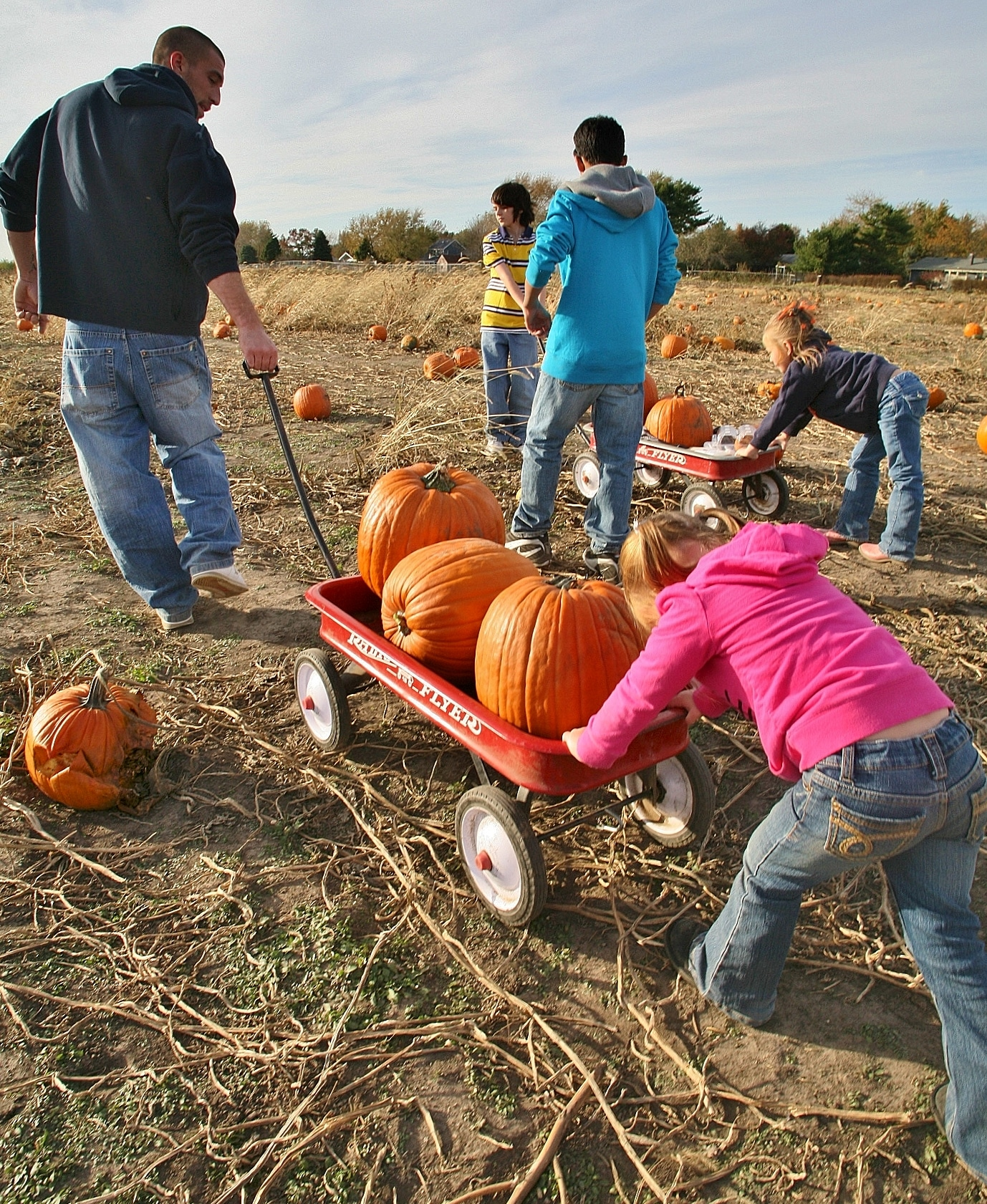 Pumpkin Patch 01