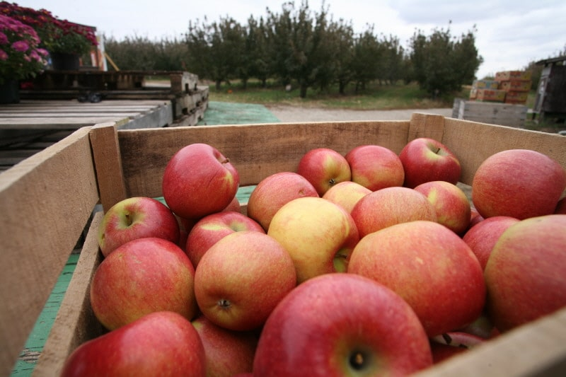 Apple Schedule - Curtis Orchard & Pumpkin Patch - Champaign, IL